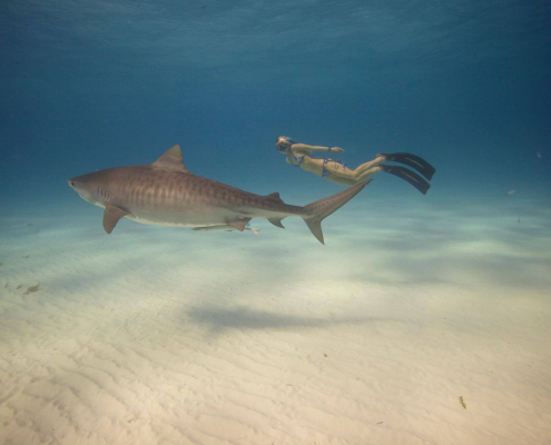 "<span style=""font-size:30px;""><strong>OCEAN RAMSEY</strong></span>"
